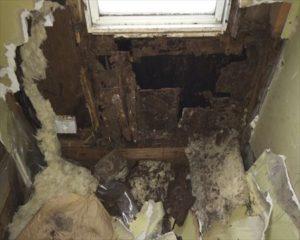 中古で購入の戸建て浴室解体後、シロアリ被害が分かった例 waterheat unitbath