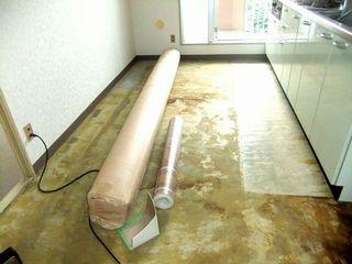 直貼りカーペット,サンゲツ,カンガバック,L35 cf carpet